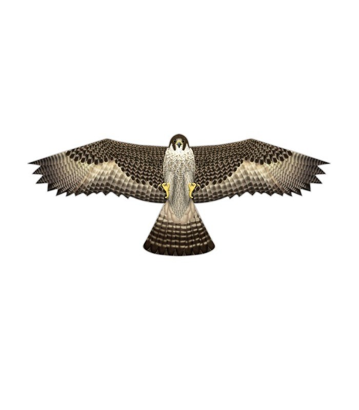 Birds of Prey Kite Falcon