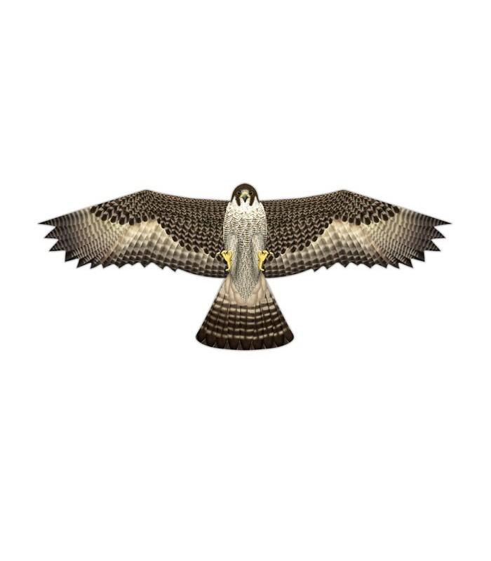 Birds of Prey Kite Falcon