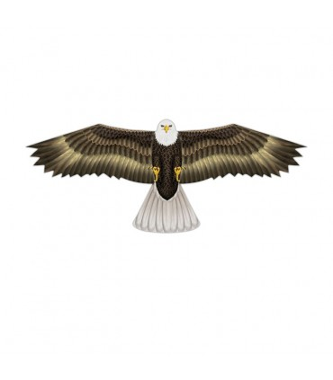 Birds of Prey Kite Eagle
